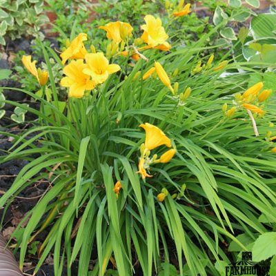 Take a Stroll Through the Farmhouse Flower Garden
