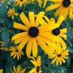 Farmhouse Flower Garden Tour