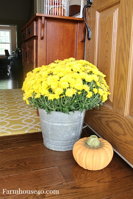 mums for fall deco