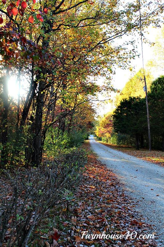 farmhouse lane with fall leaves