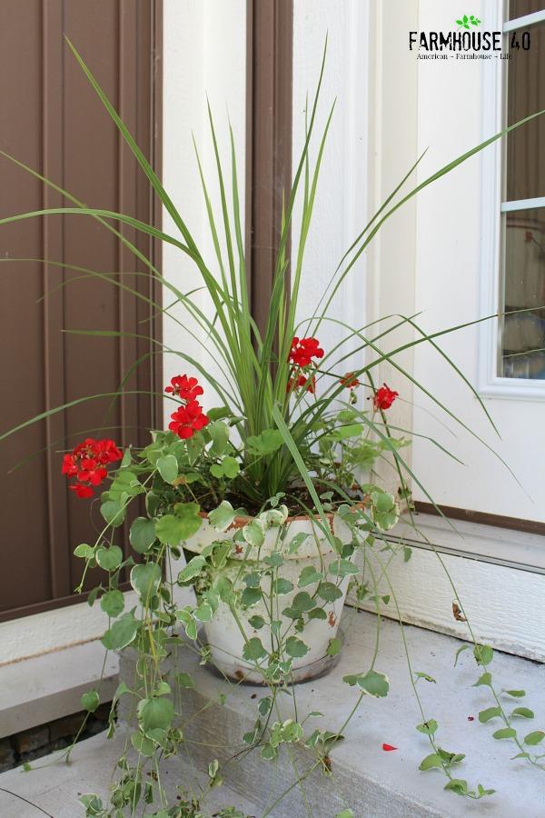 Geraniums Planter How To Save On Potting Soil Cost  Farmhouse40.com