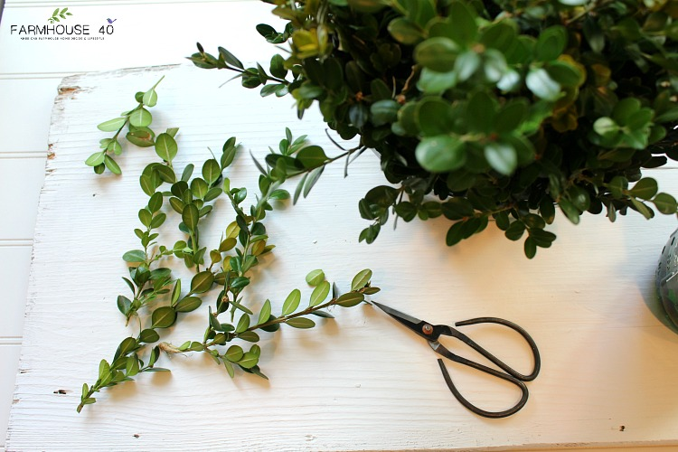boxwood preserving how to