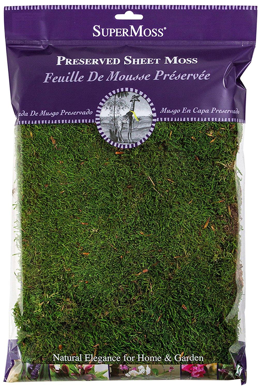 topiary-pot-moss