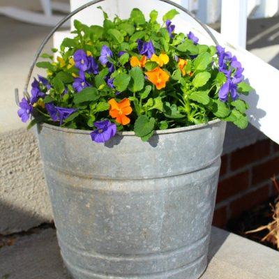 Bucket Full Of Pansies