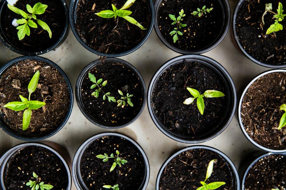 essential-gardening-improvements